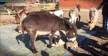 Donkeys Mourn Their Lost Friend In The Most Heartbreaking Way