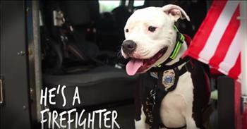 Dog Rescued From A Fire Now Helps Fight Them!