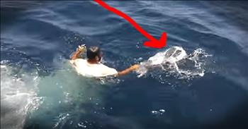 Helpless Turtle Tangled In Bag Is Freed By Kind Rescuer