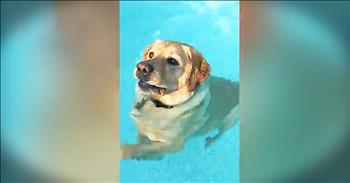 Labrador Retriever Hilariously Learns To Stand In Pool