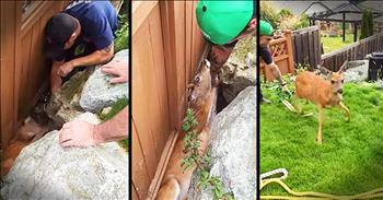 Firefighters Rush To Rescue Deer Stuck On Fence