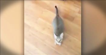 Funny Cat Does Not Like When Owner Sings - LOL!