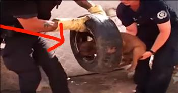 Dog Found With Tire Stuck On Head Gets Beautiful Adoption