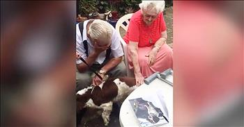Granddaughter Surprises Grandpa With A Dog After He Loses His Beloved Friend