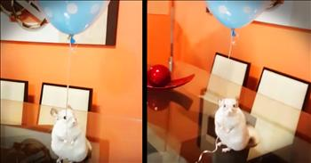 Chinchilla Holding A Balloon With His Tiny Hands Made My Day