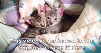 Couple Sings Adele Parody For Pet Lovers With Their Rescue Kittens