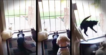 Cats Watching A Bird Get A Surprise From The Family Dog
