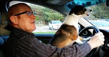 Dog Gets Super Excited When Owner Drives Him To The Dog Park