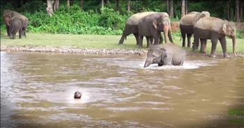 Baby Elephant Jumps In To Rescue Human She Thought Was Drowning