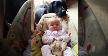 Precious Lab Helps Rock The New Baby