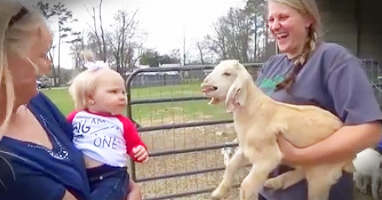 Tiny+Goat+And+Baby+Copy+Each+Other