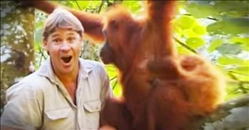Incredible Moment Steve Irwin Is Accepted By An Orangutan