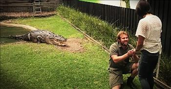 Reptile Wrangler Proposes With Help From Crocodile