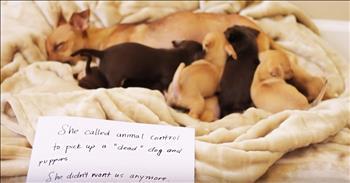Mama Dog Shares Emotional Cardboard Testimony