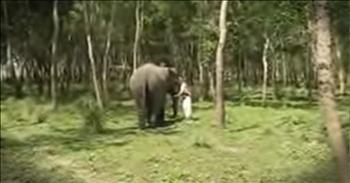 Elephant Comes Running When An Old Friend Calls Out To Her