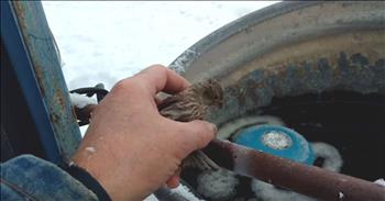 Big Burly Farmer Rescues A Tiny Frozen Finch With Just His Breath