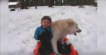 Crazy Dogs Having A Blast In The Snow Will Have You In Stitches