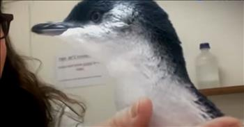 Baby Penguin Gets Rescued From A Storm Drain