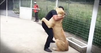 Rescued Lion Can't Stop Snuggling The First Man Who Showed Her Love