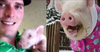 Esther The Wonder Pig Weighs 670 Pounds And Lives In The House
