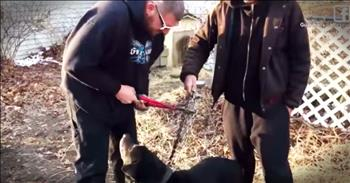 Dog Chained Up For 15 Years Finally Gets A New Lease On Life