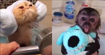 Pets At Bathtime Are So Stinkin' Cute