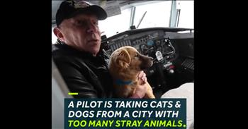 Pilot Flies Homeless Animals To A Town That Wants To Adopt Them