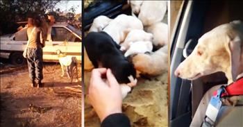 Severly Injured Dog Leads Rescuers To Her Puppies