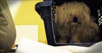 Dog Rescued Just 1 Hour Before Euthanization Has An Incredible Transformation