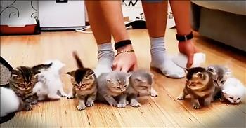 Cute Kittens Cannot Sit Still For A Photo