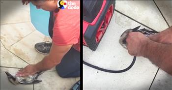 Guy Uses Air Compressor To Save Bird Life