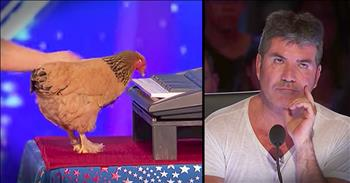 Chicken Playing The Piano Earns Standing Ovation
