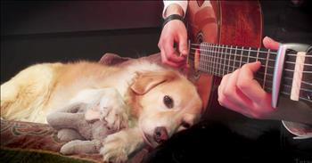Sleepy Dog Is Lulled By Her Owner's Guitar