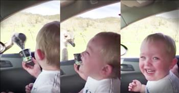 Baby Boy Has Joyful Reaction To Ostrich