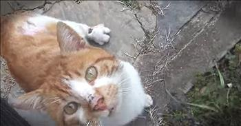 Injured Cat Meows For Help At Stranger's Door