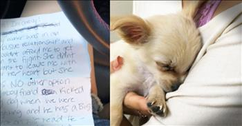 Abandoned Puppy Sheds Light On Domestic Violence