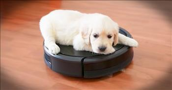 Puppy Takes A Ride On A Roomba