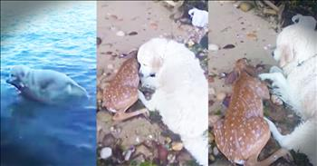 Dog Saves Drowning Baby Deer
