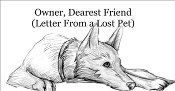Poem From Lost Pets To Their Owners