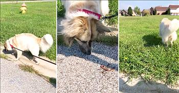 Sweet Dog Rescues Earth Worms