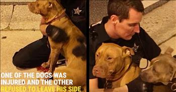 Police Officer Comforts Injured Pit Bulls