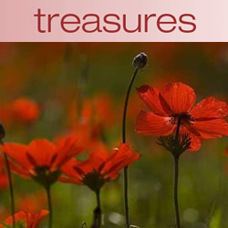 Treasures: Desert Bloom