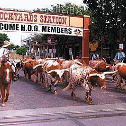 Cowboys & Culture