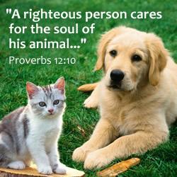 Pet Theology