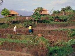 Indonesian photo